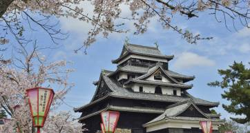 matsue castle spring cherry blossoms
