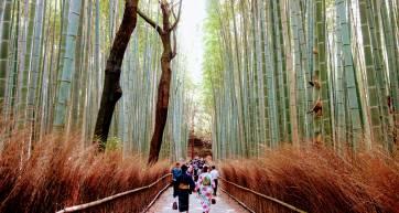 Arashiyama Sagano Bamboo Forest Kyoto