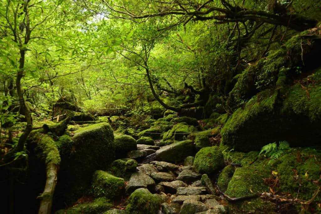 Shiratani Unsuikyo Hike