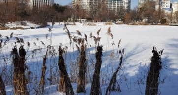 Nakajima Park Pond